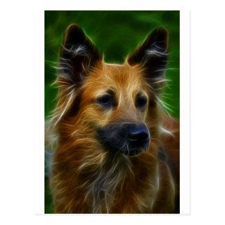 GSD German Shepherd pic Post Card