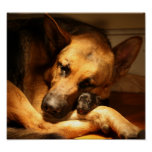 GSD Love Poster