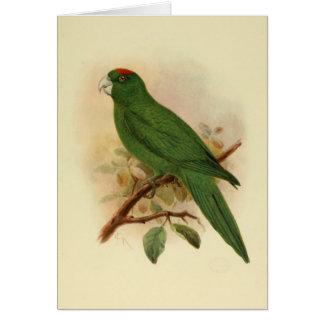 Guadeloupe Parakeet Extinct 1908 Card
