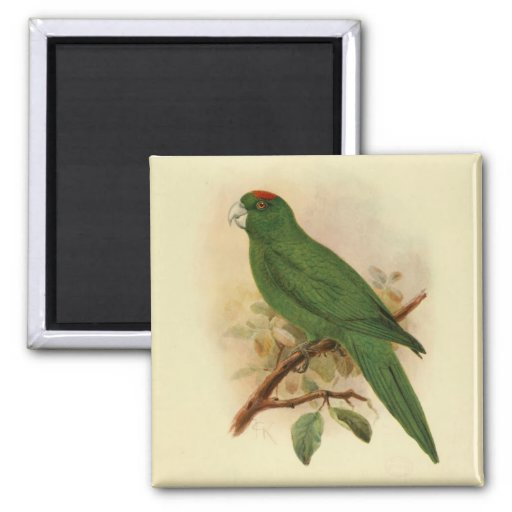 Guadeloupe Parakeet Extinct 1908 Refrigerator Magnets