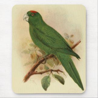 Guadeloupe Parakeet Extinct 1908 Mouse Pad