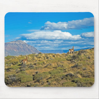 Guanaco Country, Patagonia Mouse Pad