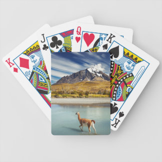Guanaco crossing the river in Torres del Paine Bicycle Playing Cards