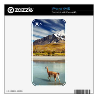 Guanaco crossing the river in Torres del Paine Decals For The iPhone 4