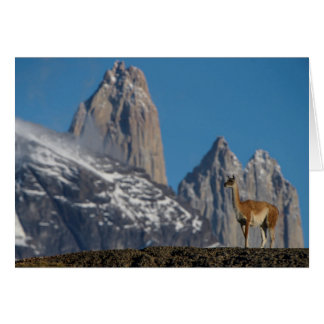 Guanaco in Torres del Paine | Chile Card