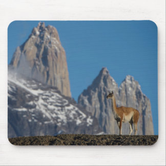 Guanaco in Torres del Paine | Chile Mouse Pad