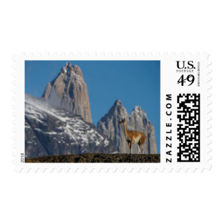 Guanaco in Torres del Paine | Chile Postage