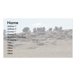 Guanaco (Lama guanicoe) Double-Sided Standard Business Cards (Pack Of 100)