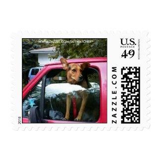 GUARD DOG STAMP