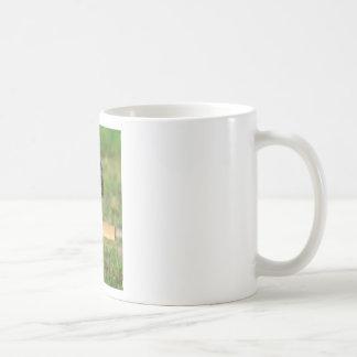 Guarda del búho tazas de café