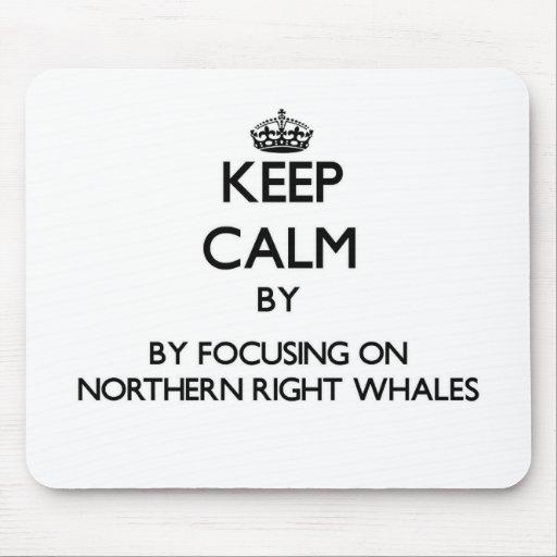 Guarde la calma centrándose en ballenas derechas s