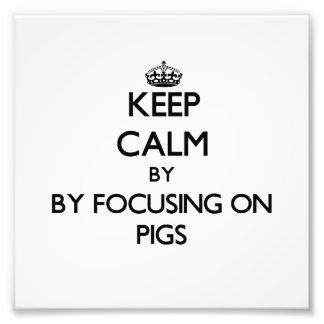 Guarde la calma centrándose en cerdos fotografías
