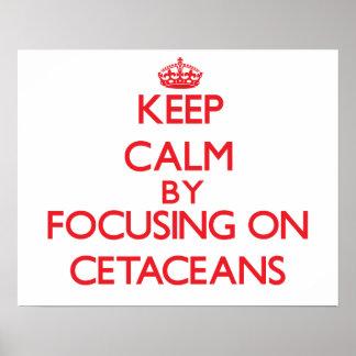 Guarde la calma centrándose en cetáceos poster