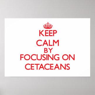 Guarde la calma centrándose en cetáceos posters