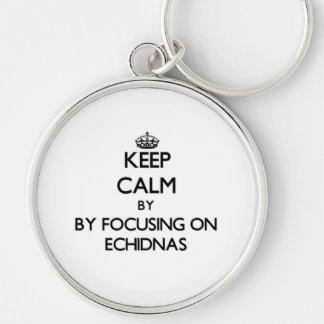Guarde la calma centrándose en Echidnas