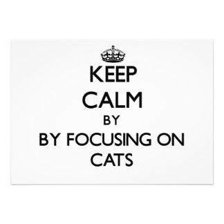 Guarde la calma centrándose en gatos