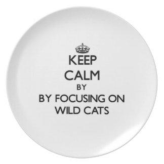 Guarde la calma centrándose en gatos salvajes plato de comida