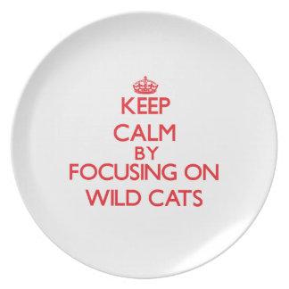 Guarde la calma centrándose en gatos salvajes platos