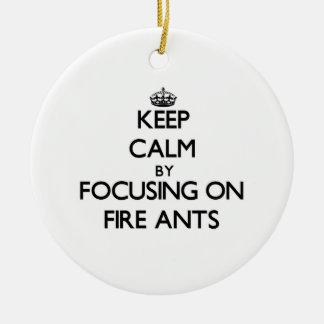 Guarde la calma centrándose en hormigas de fuego