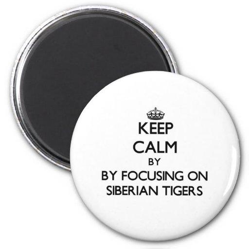 Guarde la calma centrándose en los tigres siberian imán de frigorífico