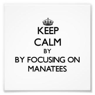 Guarde la calma centrándose en Manatees Impresiones Fotográficas