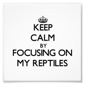 Guarde la calma centrándose en mis reptiles