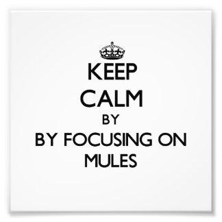 Guarde la calma centrándose en mulas fotografías