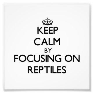 Guarde la calma centrándose en reptiles