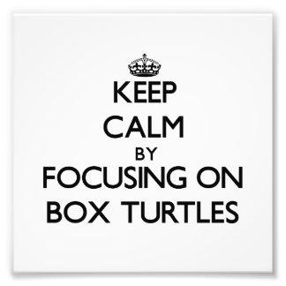 Guarde la calma centrándose en tortugas de caja cojinete
