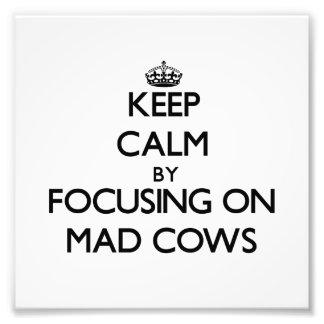 Guarde la calma centrándose en vacas locas impresiones fotográficas
