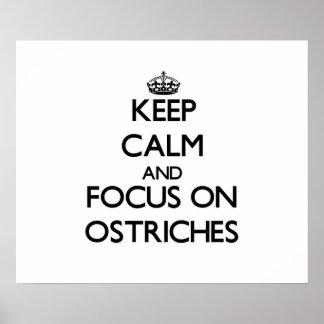 Guarde la calma y el foco en avestruces posters