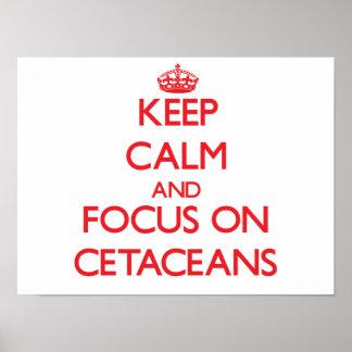 Guarde la calma y el foco en cetáceos