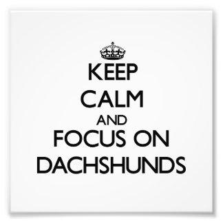 Guarde la calma y el foco en Dachshunds Impresion Fotografica