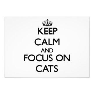 Guarde la calma y el foco en gatos
