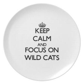 Guarde la calma y el foco en gatos salvajes plato de comida
