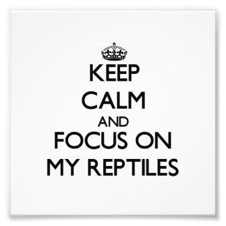Guarde la calma y el foco en mis reptiles