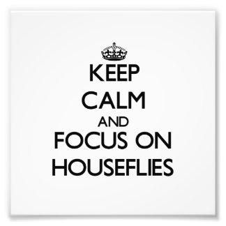 Guarde la calma y el foco en moscas domésticas