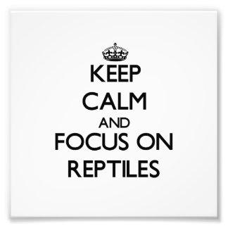 Guarde la calma y el foco en reptiles