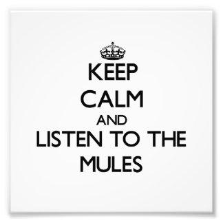 Guarde la calma y escuche las mulas cojinete