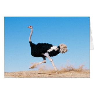 Guarde la tarjeta corriente de la avestruz