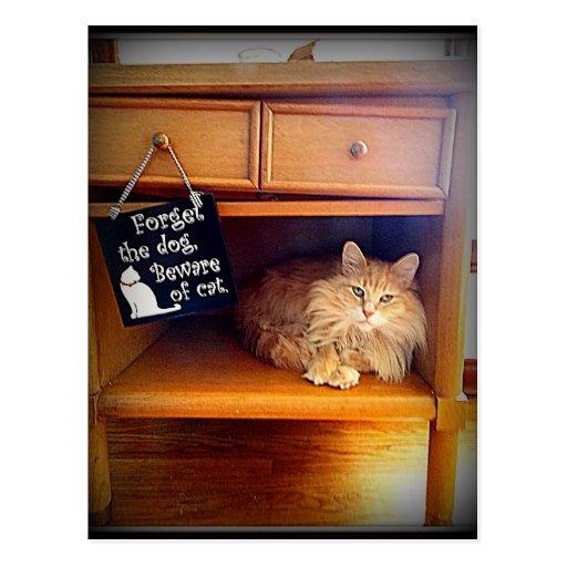 guárdese de la postal del gato