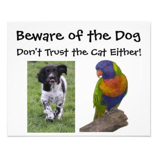 Guárdese del perro. ¡No confíe en el gato tampoco! Fotografías