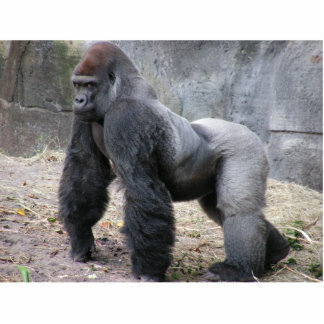 guardia del escritorio del gorila fotoescultura vertical