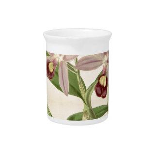 Guarianthe skinneri (as Cattleya skinneri) Drink Pitchers