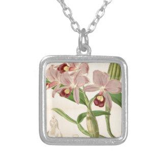 Guarianthe skinneri (as Cattleya skinneri) Square Pendant Necklace