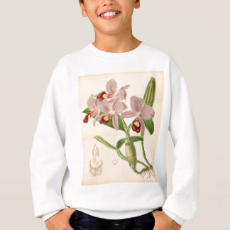 Guarianthe skinneri (as Cattleya skinneri) Sweatshirt