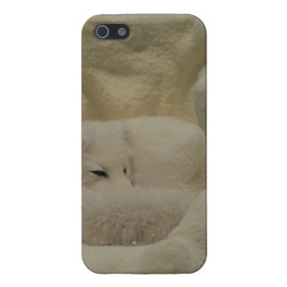 Guarida del Fox ártico
