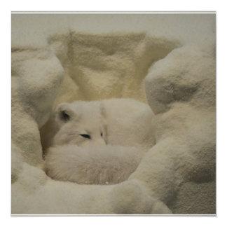 Guarida del Fox ártico Invitación 13,3 Cm X 13,3cm