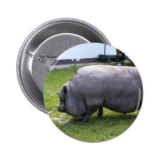 Guarro dulce del día el | del cerdo pin redondo de 2 pulgadas