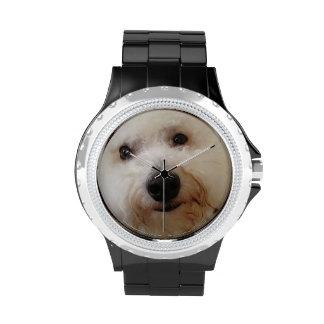 Gucci (Bichon Frise) mira Reloj De Mano